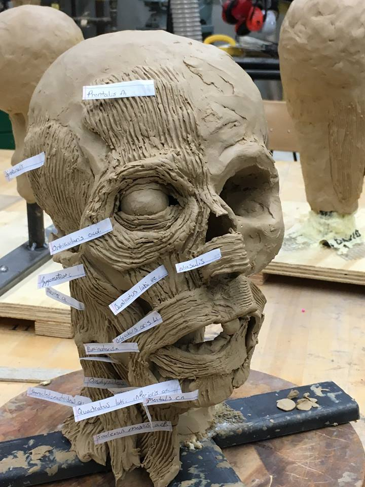 Figurative sculpture - head in clay with interior anatomy